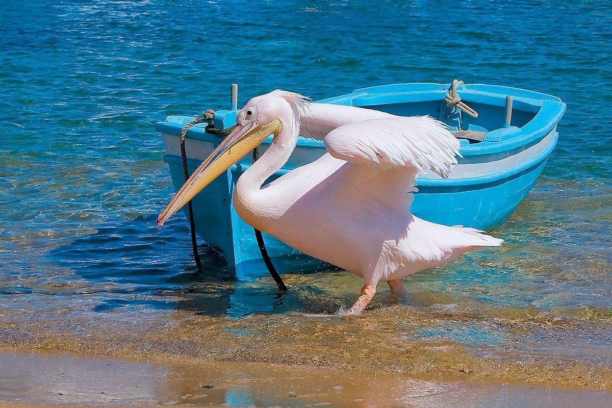 Combiné dans les Cyclades depuis Santorin - Santorin, Mykonos, Naxos et Paros en 4*