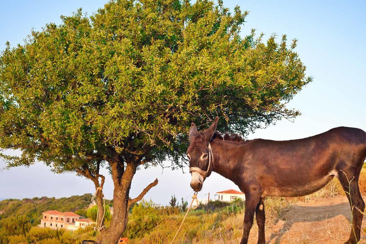 Périples dans les Sporades depuis Athènes - Skopelos, Alonissos et Skiathos - 4