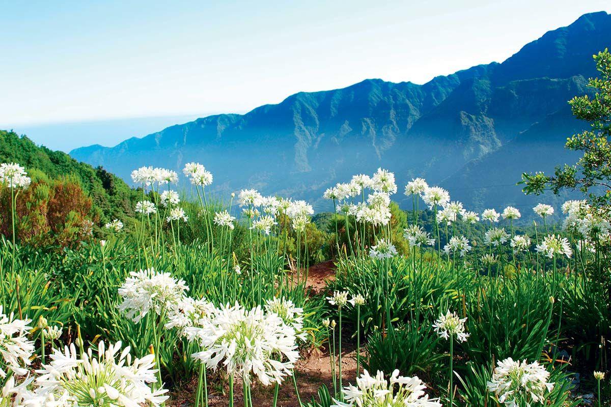 Autotour La route des fleurs depuis le Club Héliades Pestana Ocean Bay Suites 4*